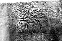 Fingerprint lifted from powdered latex glove