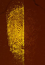 Fluorescing fingerprint treated with IND-Zn (left) and DFO (right)