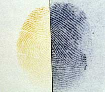 Fingerprint developed with iodine, the right part fixed with benzoflavone
