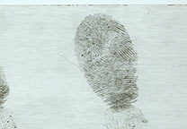 Fingerprint on transparant packing tape developed with wet powder black and photographed against a white background.