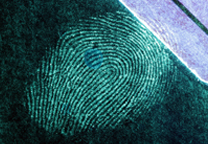 Fingerprint on blue metal surface developed with SPR UV, excitation with 365 nm light.